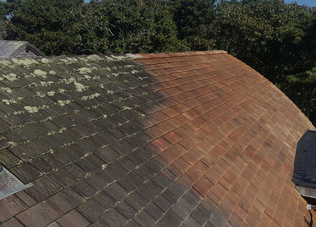 cleaning and removing plants from the roof